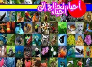 عاطف محمد يكتب: أحياء تحتاج إلى أحياء