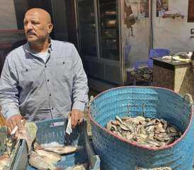 بالصور . نائب برلماني يمارس بيع السمك بالمنزلة دقهلية