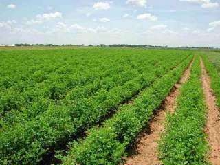 وزارة الزراعة: الأراضي خرجت خلال الـ40 عاما الماضية من دائرة إنتاج الغذاء الآمن